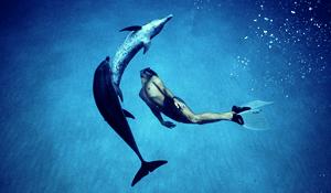 DolphinBoy